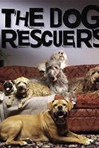 Постер сериала Спасение собак