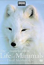 BBC: Жизнь млекопитающих