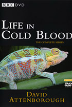 BBC: Жизнь с холодной кровью